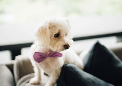 pes na svatbě